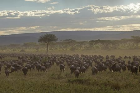 great-migration-in-the-central-serengeti