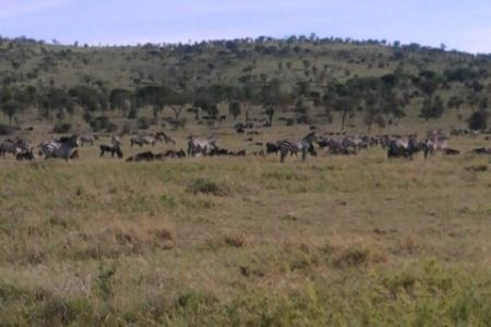 migratory-herds-close-to-the-moru-kopjes