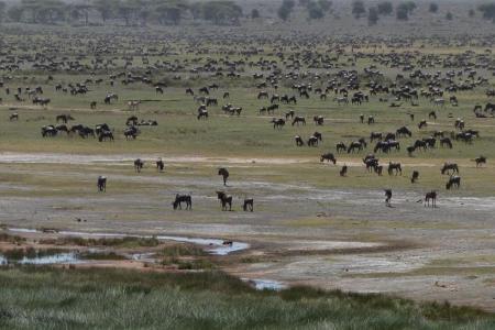 the-migration-in-ndutu