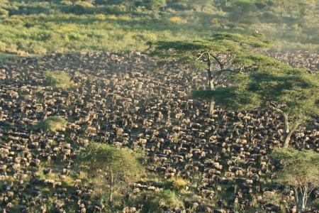 the-wildebeest-migration-in-ndutu