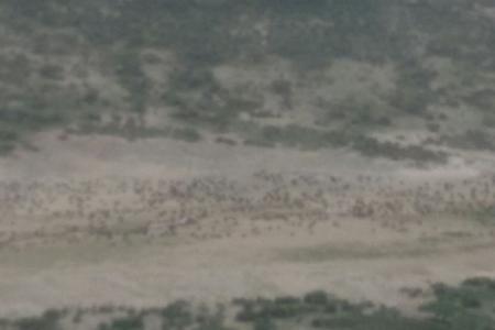 wildebeest-herds-between-ndutu-and-kusini