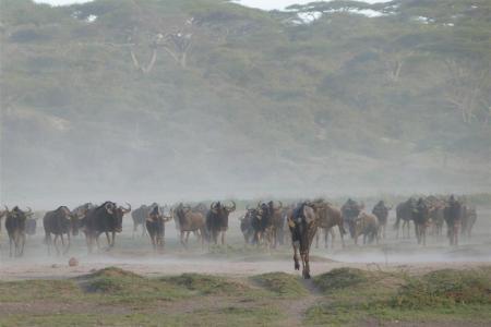 theres-been-lots-of-rain-in-ndutu