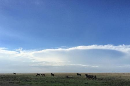 wildebeest-on-the-southern-plains