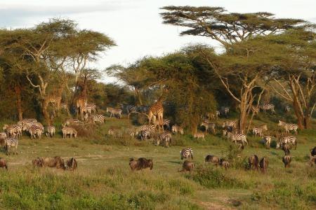 wildlife-in-ndutu