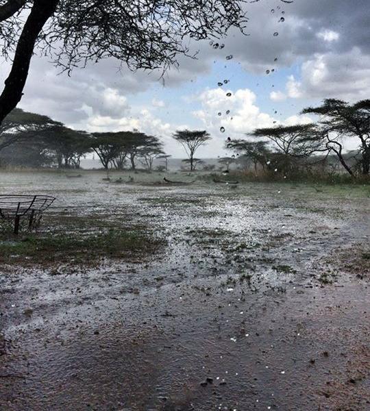 Big Rains On The Southern Serengeti Plains By Alex Walker