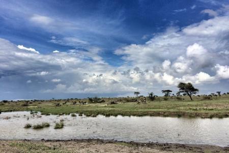 wildebeest-grazing-in-the-southern-serengeti