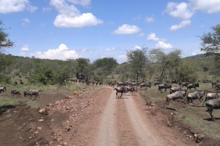 the-herds-are-heading-to-lake-magadi