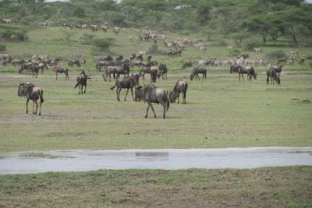 the-migration-around-ndutu