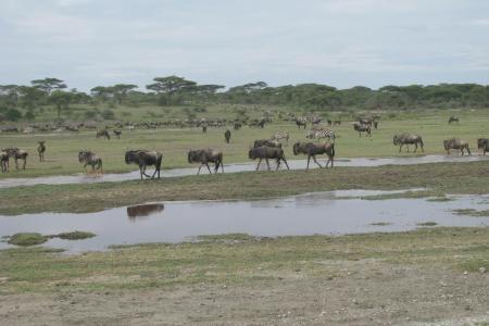 the-herd-close-to-lemala-ndutu