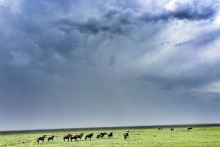 cloudy-serengeti-skies