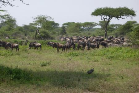 good-numbers-around-the ndutu-marshes