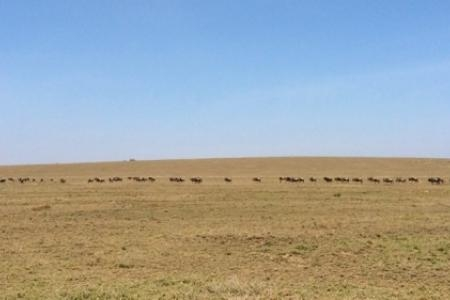 things-are-drying-out-in-the-serengeti
