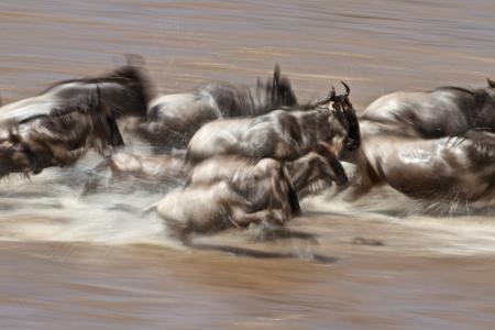 wildebeest-migration-on-the-move