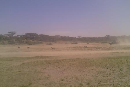 wildebeest-on-the-move-in-ndutu