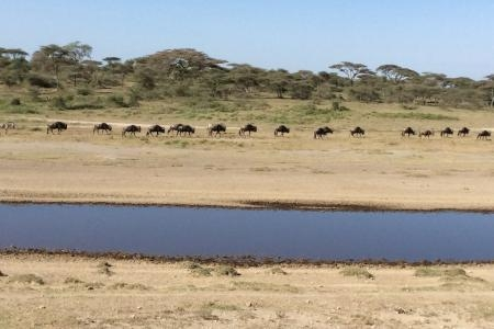 the-ndutu-plains-are-drying-out