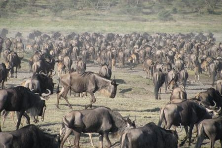 herds-are-moving-into-the-southern-serengeti