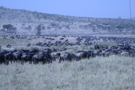 the-herds-are-at-the-moru-kopjes-and-lake-magadi