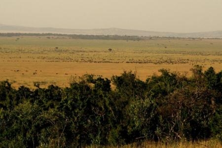 large-herds-have-camped-out-on-the-nyati-plains