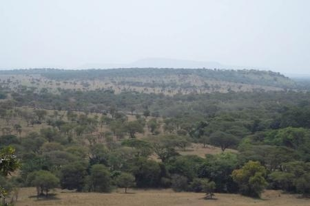 herds-arrived-close-to-mbalageti