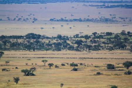 herds-are-moving-towards-nyasirori