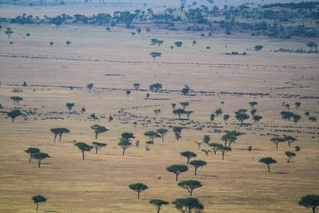 small-herds-in-the-western-grumeti-reserves