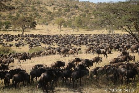 the-herds-are-moving-from-the-moru-area