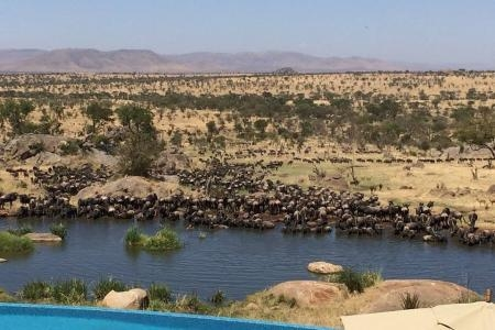 wildebeest-at-the-waterhole