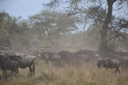 things-are-dry-in-the-serengeti