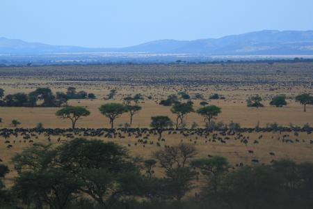 herds-on-the-sabora-and-nyati-plains