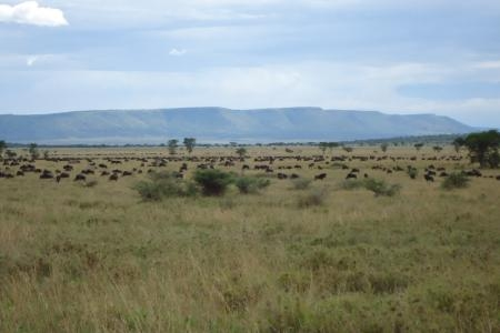herds-at-makoma-hill