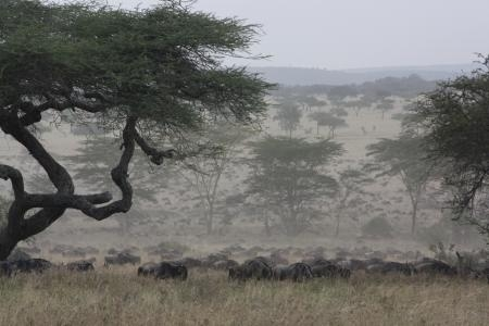 the-serengeti-migration