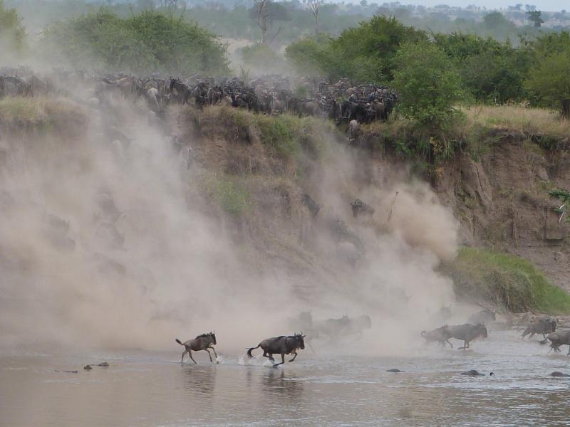 Wildebeest-migration-river-crossings