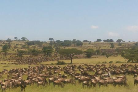 huge-herds-at-lobo