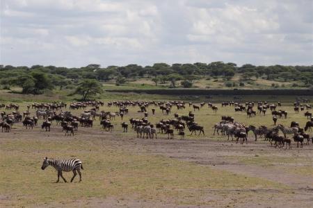 wildebeest-and-zebra-in-the-hidden-valley