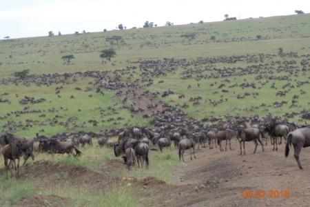 migration-in-bologonja