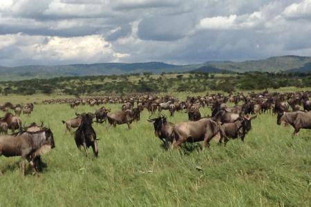 big-herd-in-bologonja
