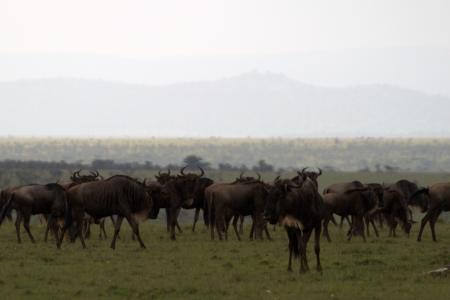 the-loita-herds