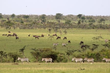 loita-herds-in-naboisho