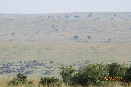 migration-in-the-masai-mara