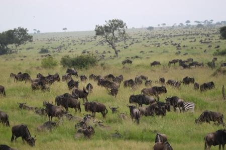 herds-are-close-to-the-kenya-tanzania-border