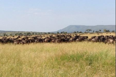 herds-passing-mkoma-hill