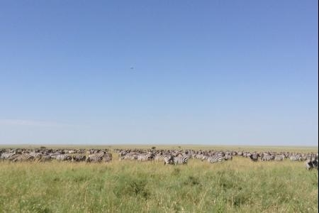 big-herds-in-the-mkoma-area