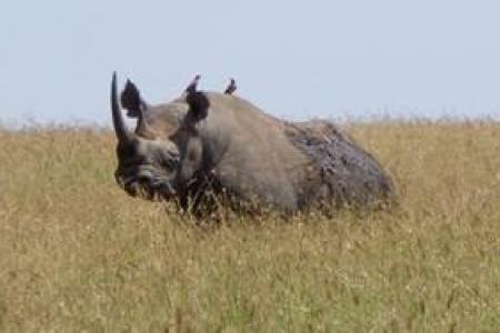 wonderful-rhino-sighting