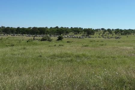 zebra-in-lobo