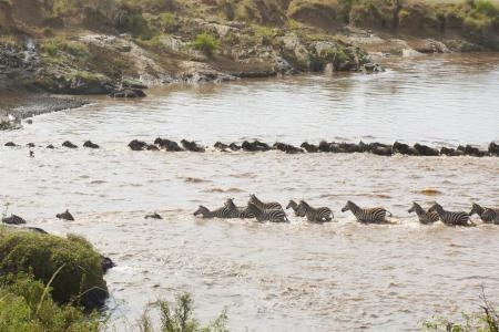 great-migration-crossing-the-mara-river
