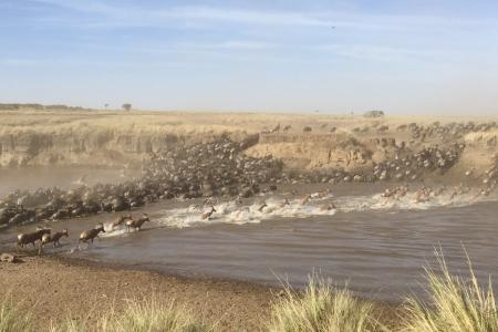 wildebeest-and-topi-crossing-the-mara-river