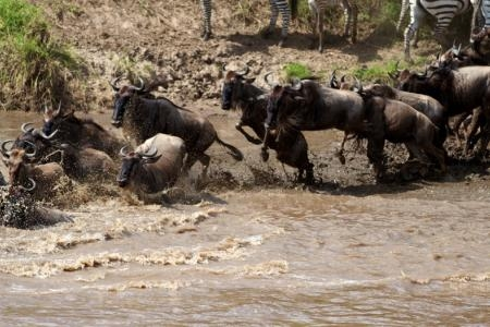 mara-river-crossings