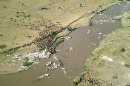 wildebeest-migration-crossing-the-mara-river