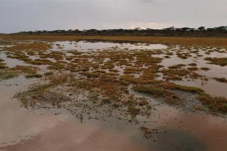flooding-on-the-southern-serengeti-plains