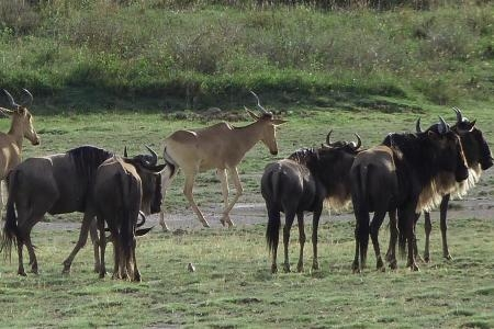 the-migration-has-arrived-in-ndutu